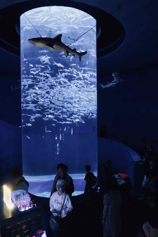 ocean-park-hong-kong-3.jpg