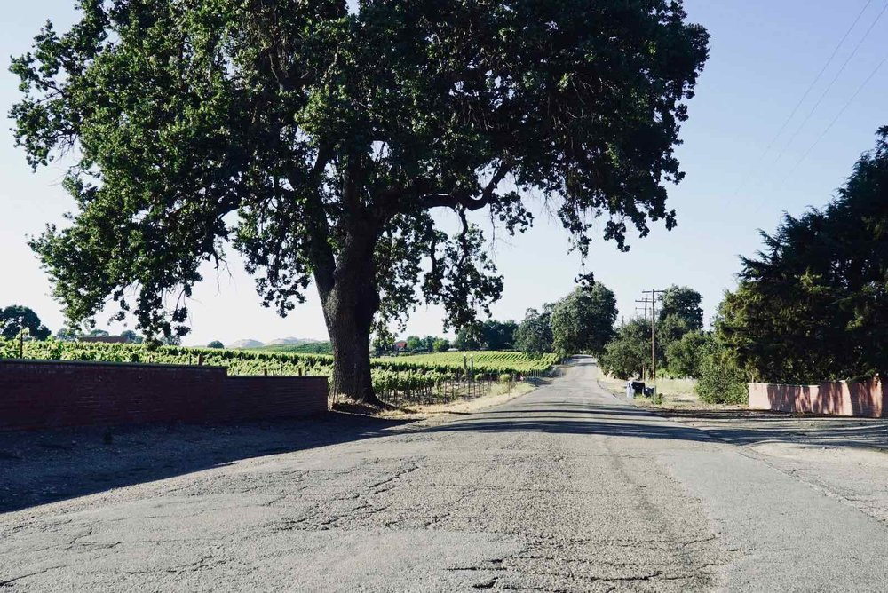 paso-robles-ca-wine-country-1.jpg