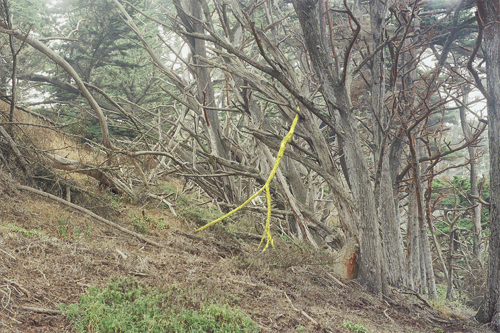 Fallen Branch /  Monterey, CA