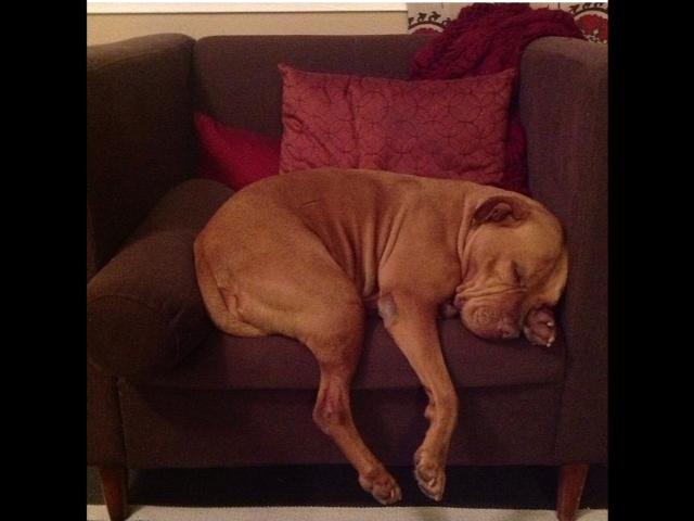 McKenzie's naptime. From Tamara.