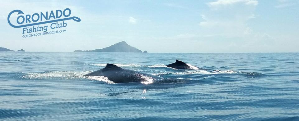 website-banner-whales.jpg