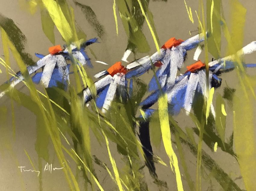 Daisies   11 x 14 Pastel by Tony Allain / $1300