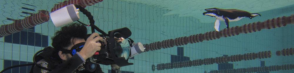Prática em piscina / SP