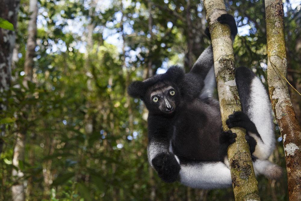 Viagem para Madagascar