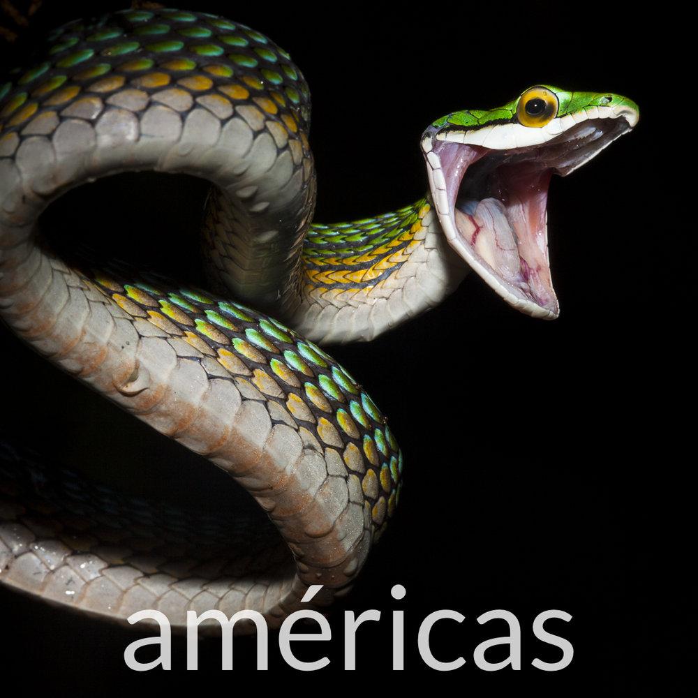 Fotografia Americas.jpg