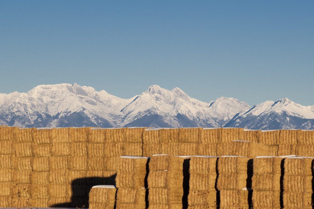 Sangre de Cristo mountains and hay bales