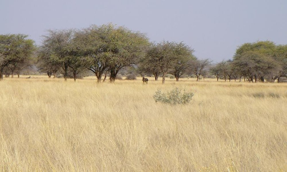Savanna (and animals) near Kuruman, South Africa. Photo by Brian Dell. Source: https://commons.wikimedia.org