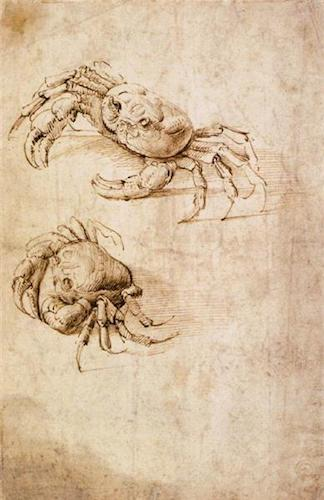 Studies of crabs (2nd half of 15th c.), by Leonardo da Vinci. Source:  wikiart.org