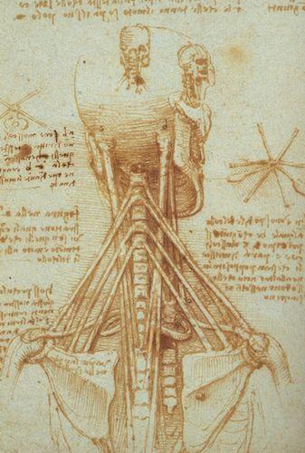 """Anatomy of human neck"" (c.1515), by Leonardo da Vinci. Source: commons.wikimedia.org/"