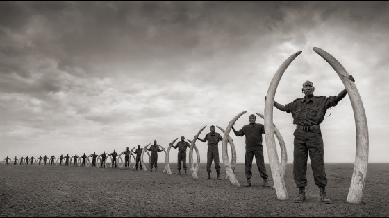 Line of Rangers Holding Tusks Killed at the Hands of Man, Amboseli National Park, Kenya (2011), archival pigment print by Nick Brandt. Source: artworksforchange.org/portfolio/extinction/