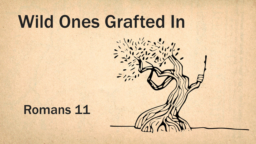 Romans 11 - Wild Ones Grafted In WIDE.001.jpeg