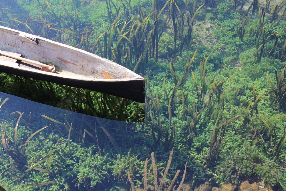 DMAswamp.jpg