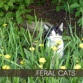 buttons-photogalleries-feralcats.png