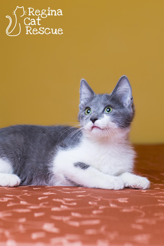 Delrulo — Regina Cat Rescue