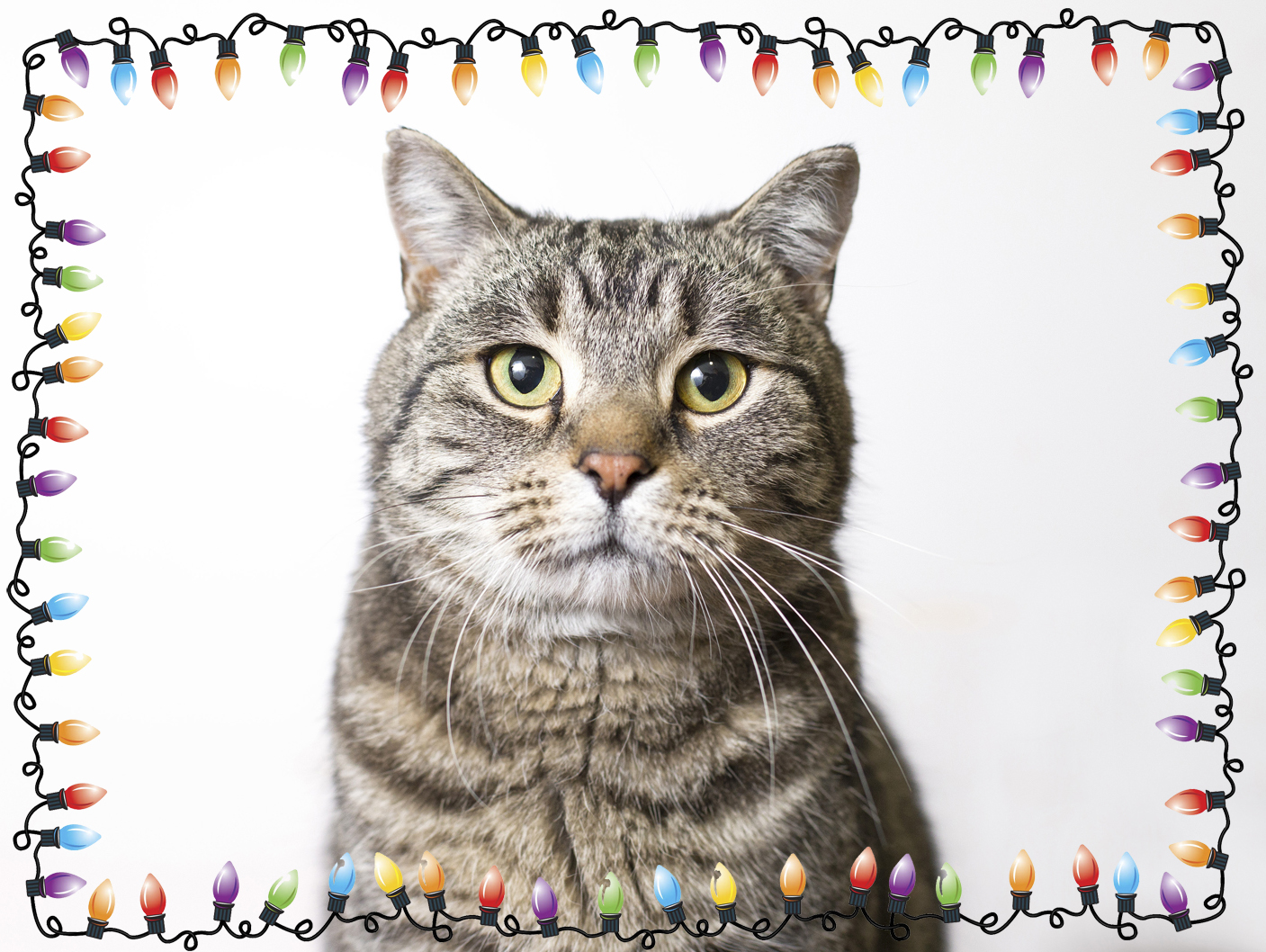 I\'ll be home for Christmas - Frodo — Regina Cat Rescue
