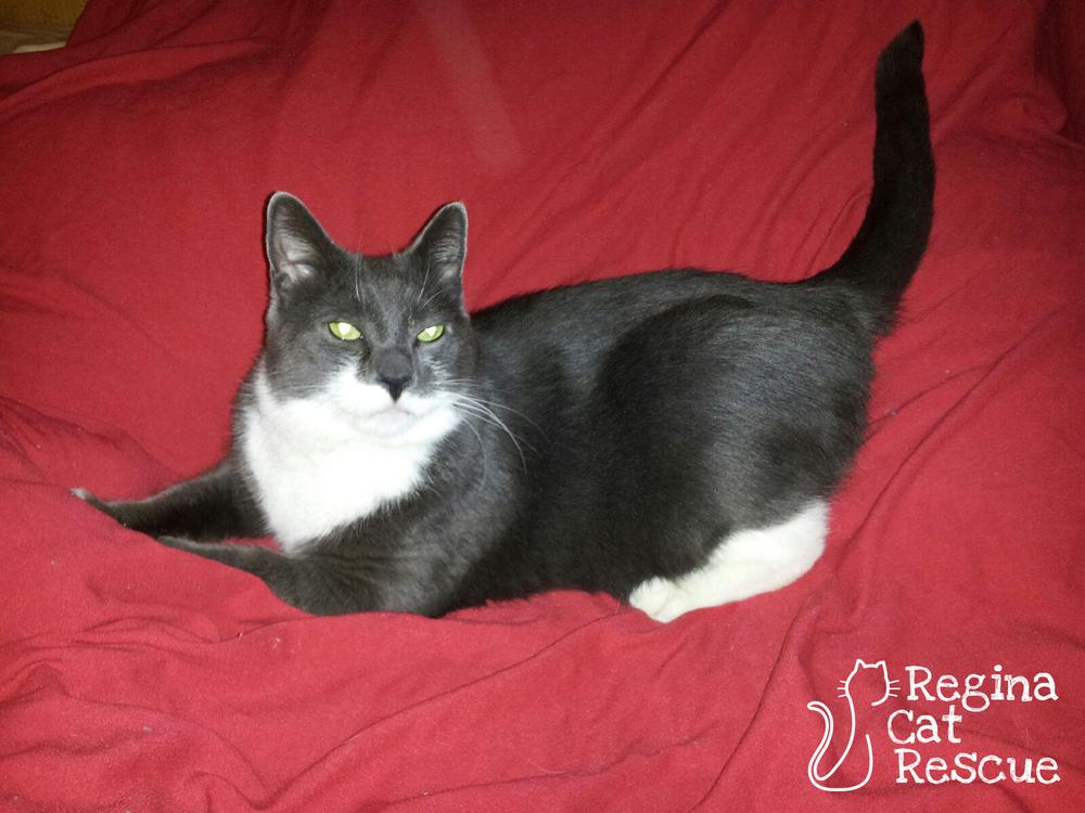 Adoption Regina Cat Rescue