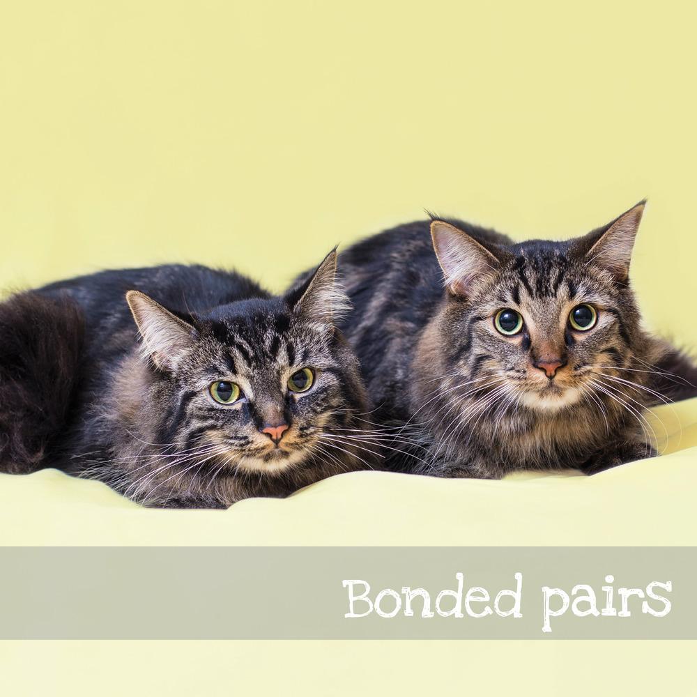 bondedpairs.jpg