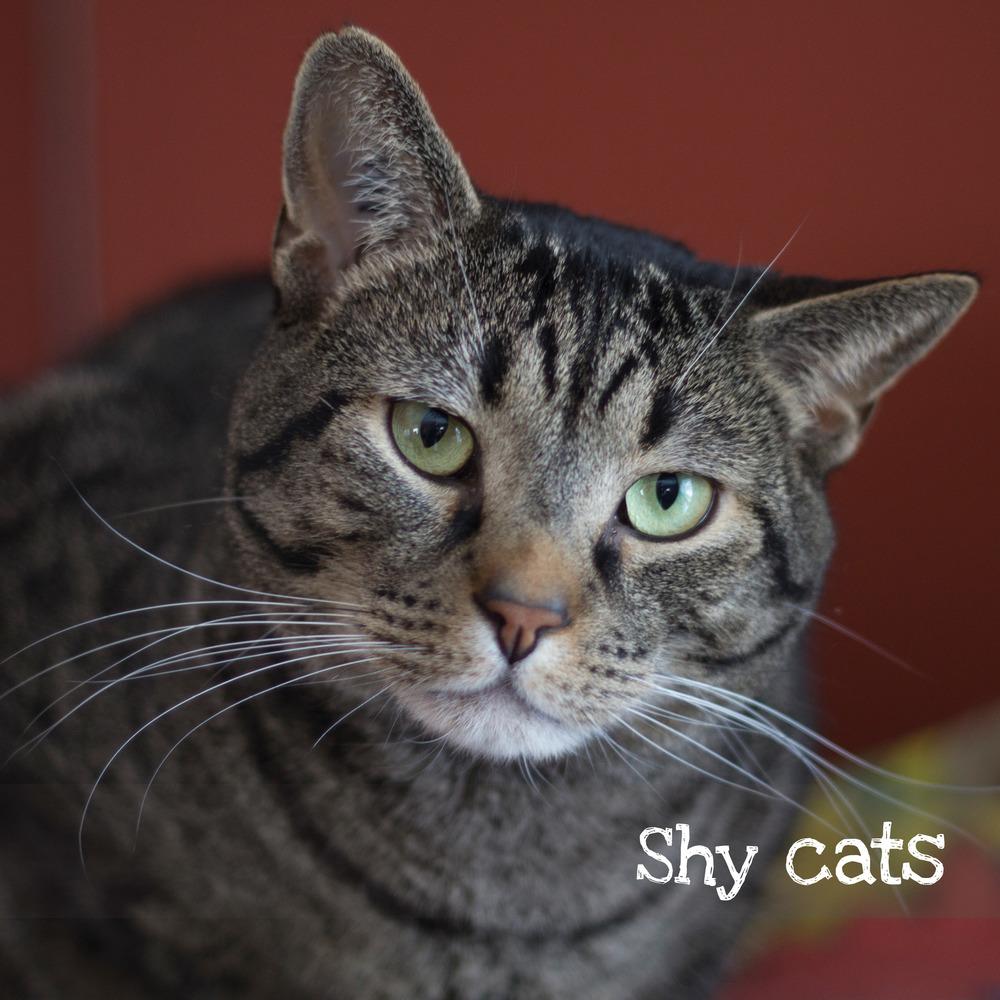 shycats.jpg
