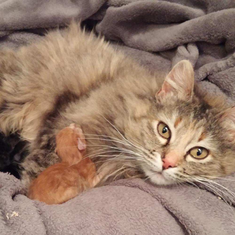 Meet our volunteers Danielle Gauthier Kratz — Regina Cat Rescue