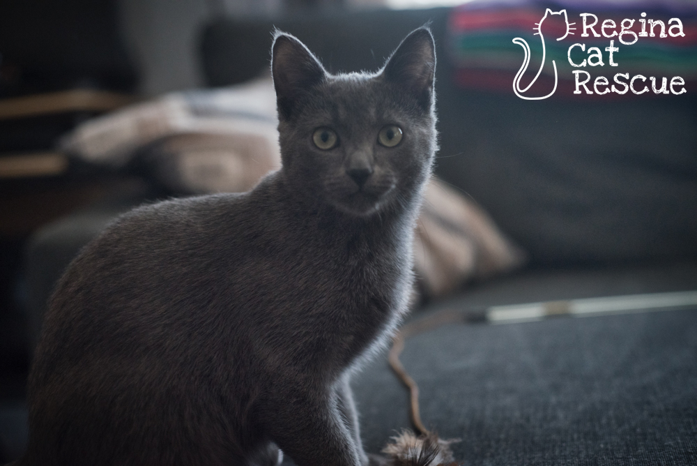 Photos of Smokey by Erika Gayle Photography
