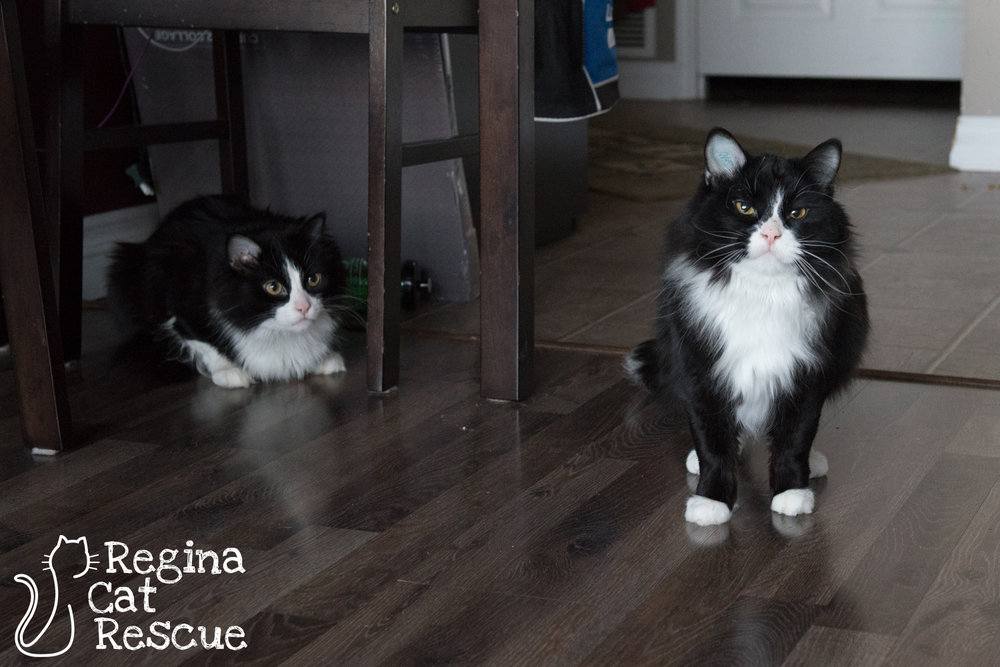 Photos of Whiskey (L) & Runt (R) by Erika Gayle Photography