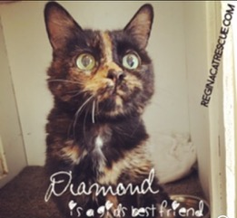 The lovely Diamond, who had a BFF in her loving foster mom!