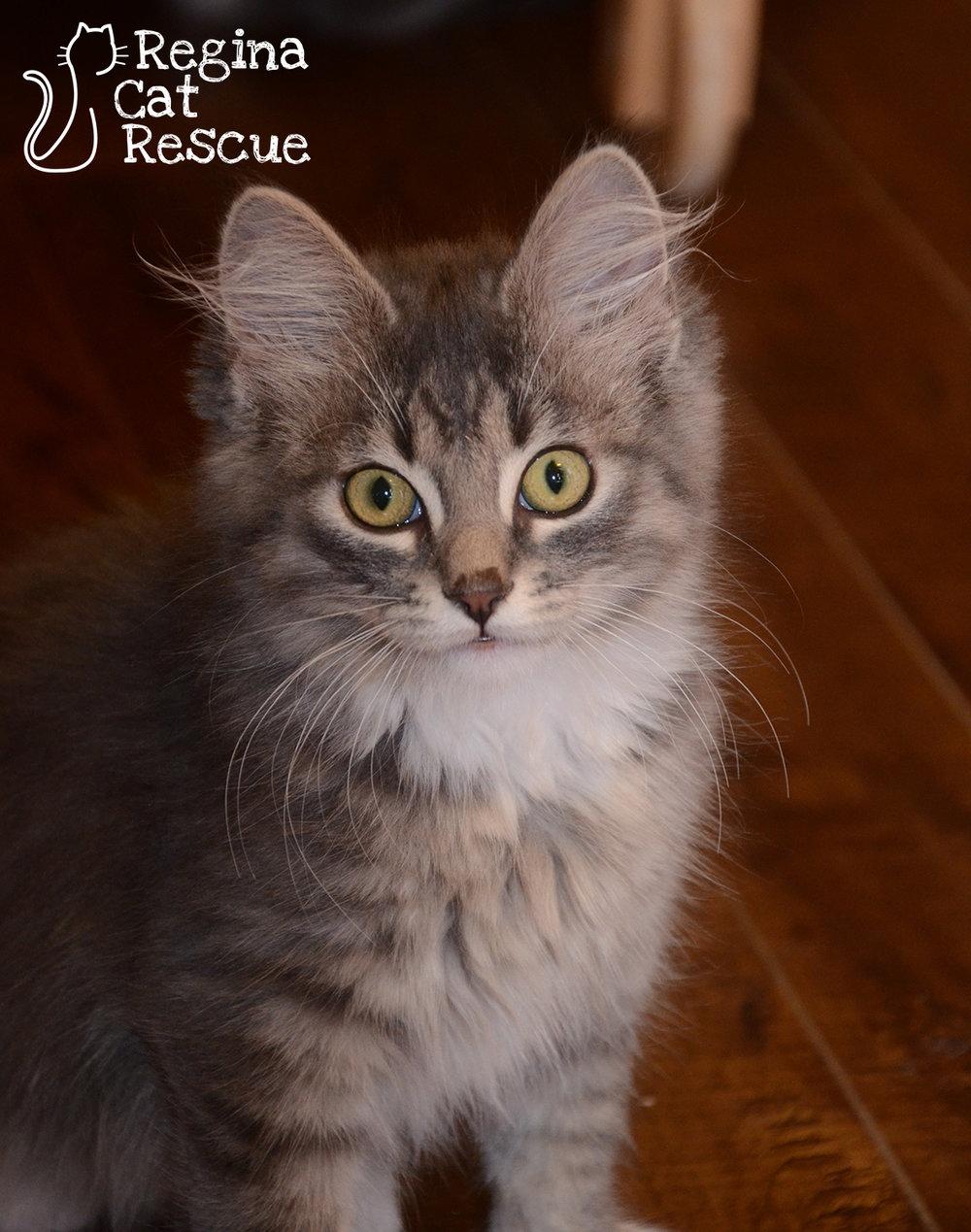 Murphy — Regina Cat Rescue