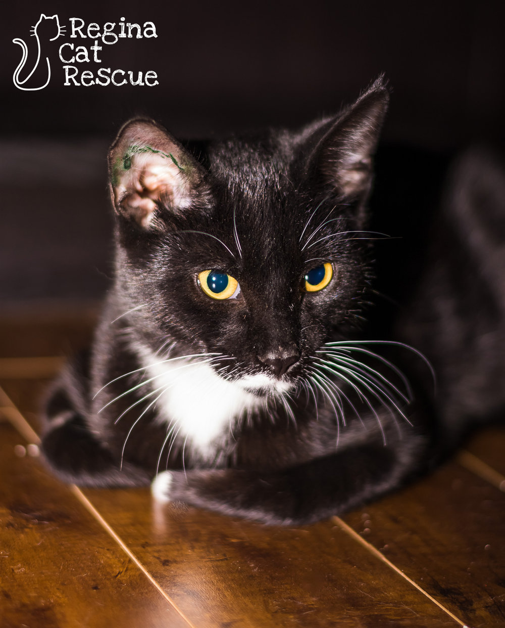 Photos of Tux by Lindsey-Frozen Moments Photography