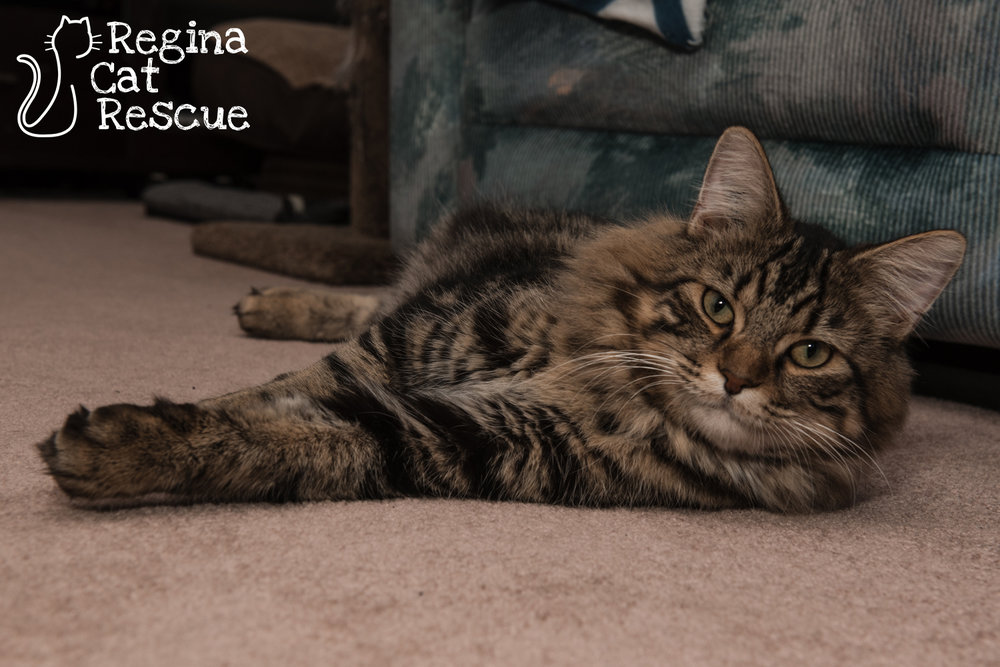 Photos of Clooney by Erika Gayle Photography