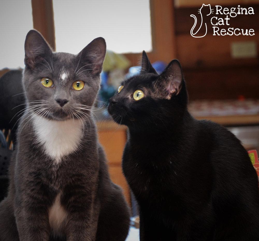 Mooney and his sister Bella