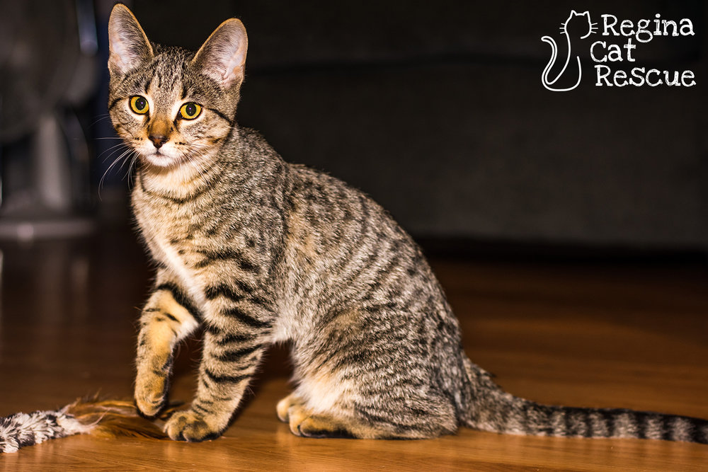 Photos of Trix by Lindsey-Frozen Moments Photography