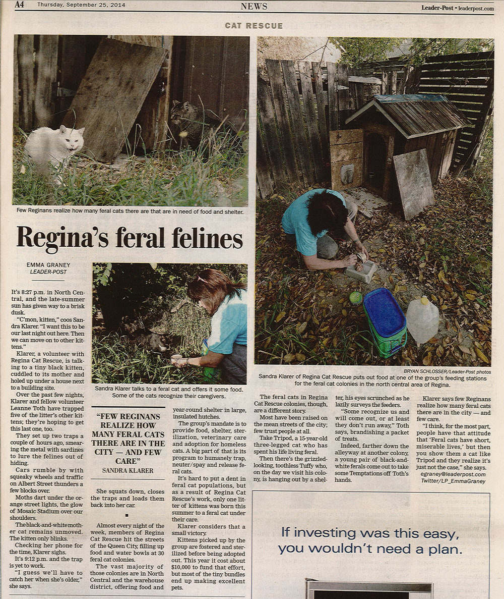 """In 2014, The Leader-Post participated in a """"ride along"""" with RCR community cat volunteers to better understand the plight of these animals in Regina. Click through for more of RCR in the news throughout the years."""