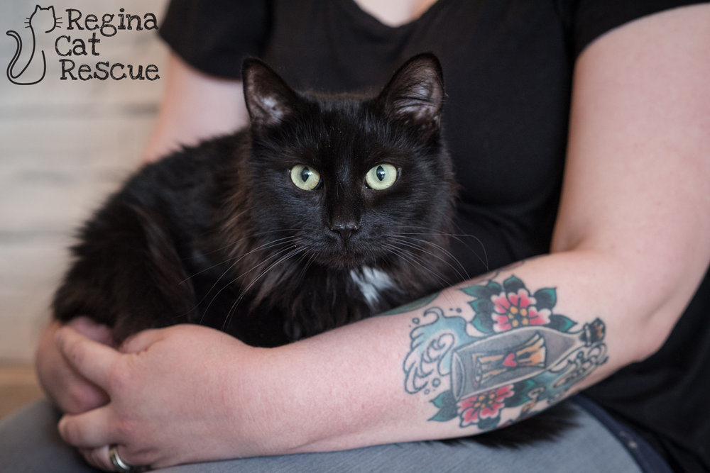 Photos of Tasha by Erika Gayle Photography