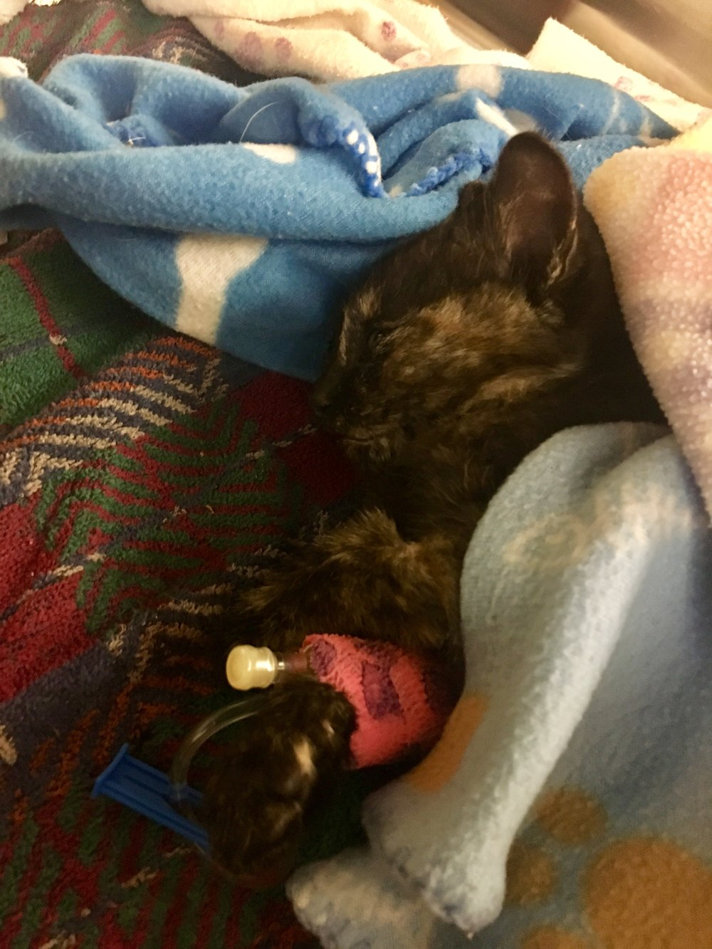 Eden on the day of her rescue. She was suffering from life-threatening injuries including a collapsed lung, broken tail and broken pelvis.