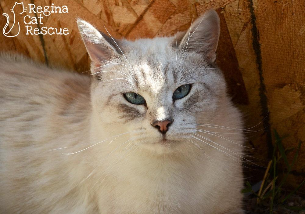 Sienna2-Sept2018.jpg