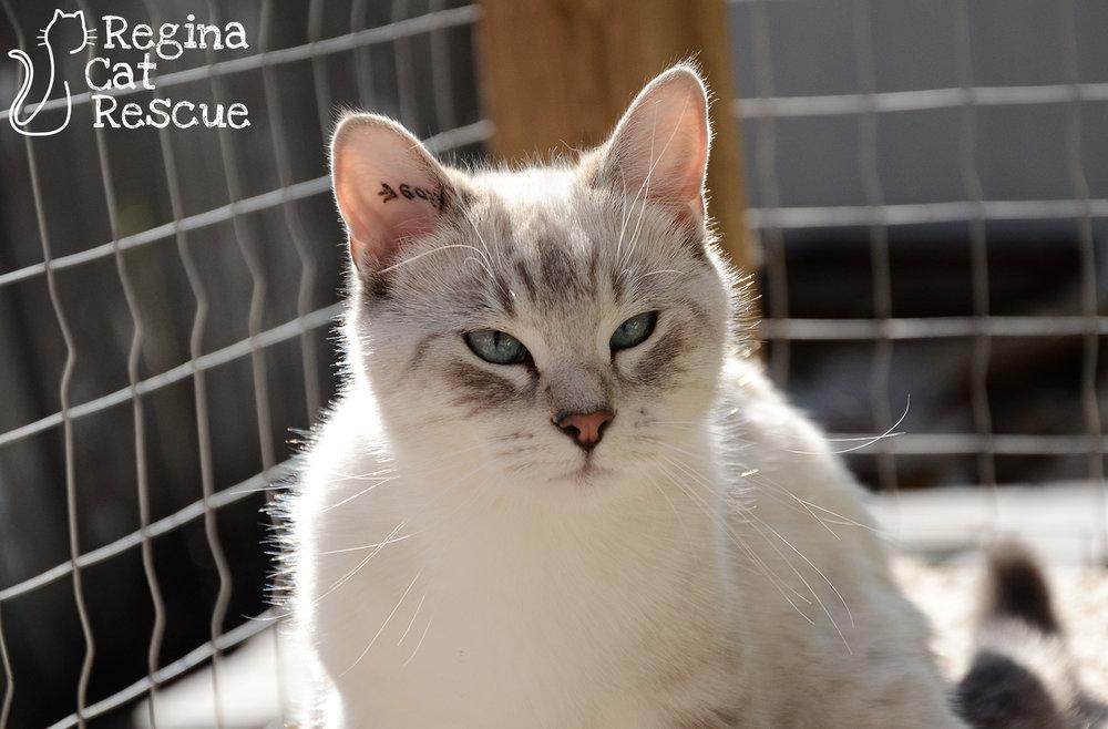 Sienna4-Sept2018.jpg
