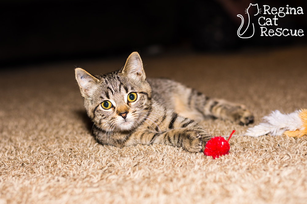 Photos of Lucie by Lindsey-Frozen Moments Photography