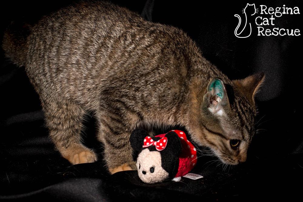 Minnie3-March2019.jpg