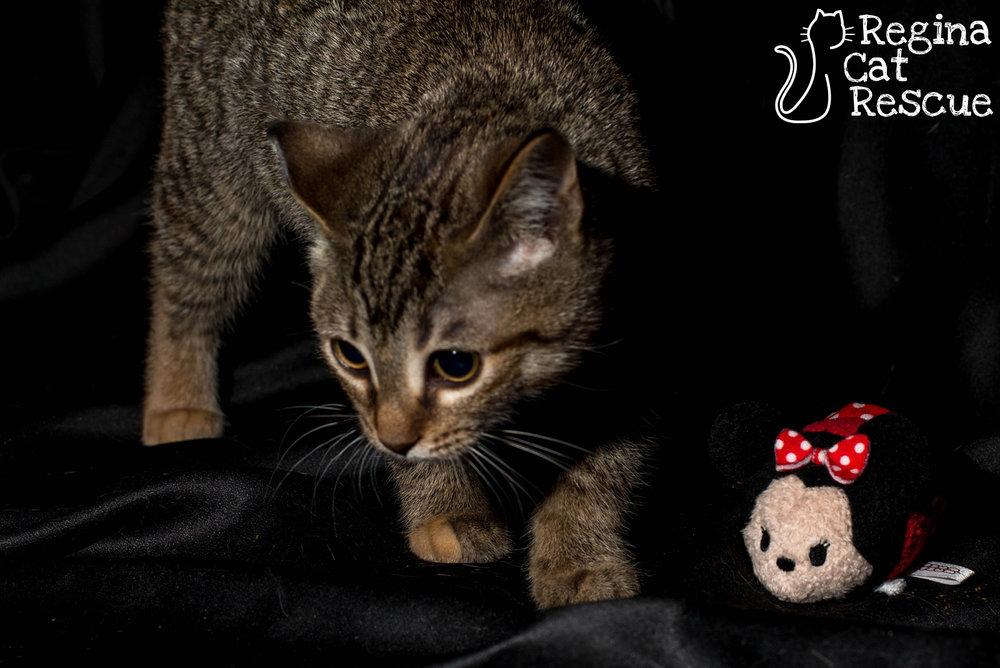 Minnie4-March2019.jpg