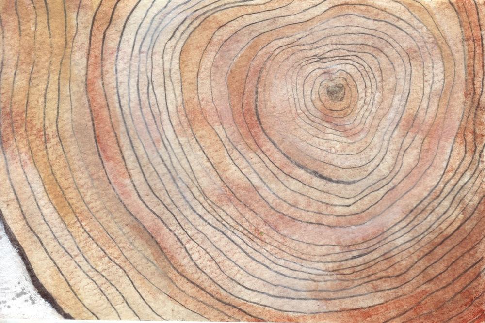 treeringPOSTCARDtoShelby.jpeg