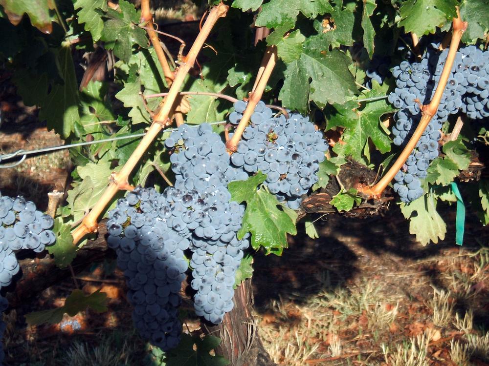 2007 Cabernet Sauvignon, Kestrel Vineyards