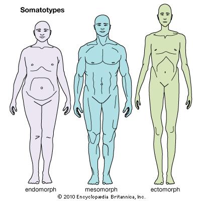 somatotype theory