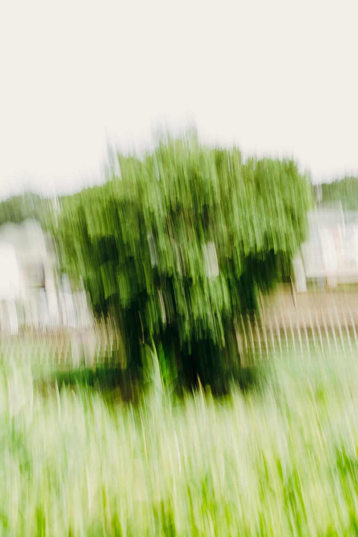 Arboreal #9192 (Setagaya)