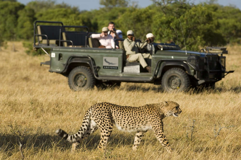 big-cat-safari-1.jpg