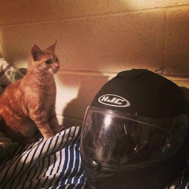 After over 700 miles, I am having to deal with a cat that is in love with my helmet. So. Effing. Cute. #motorbike #cat #travel #northcarolina