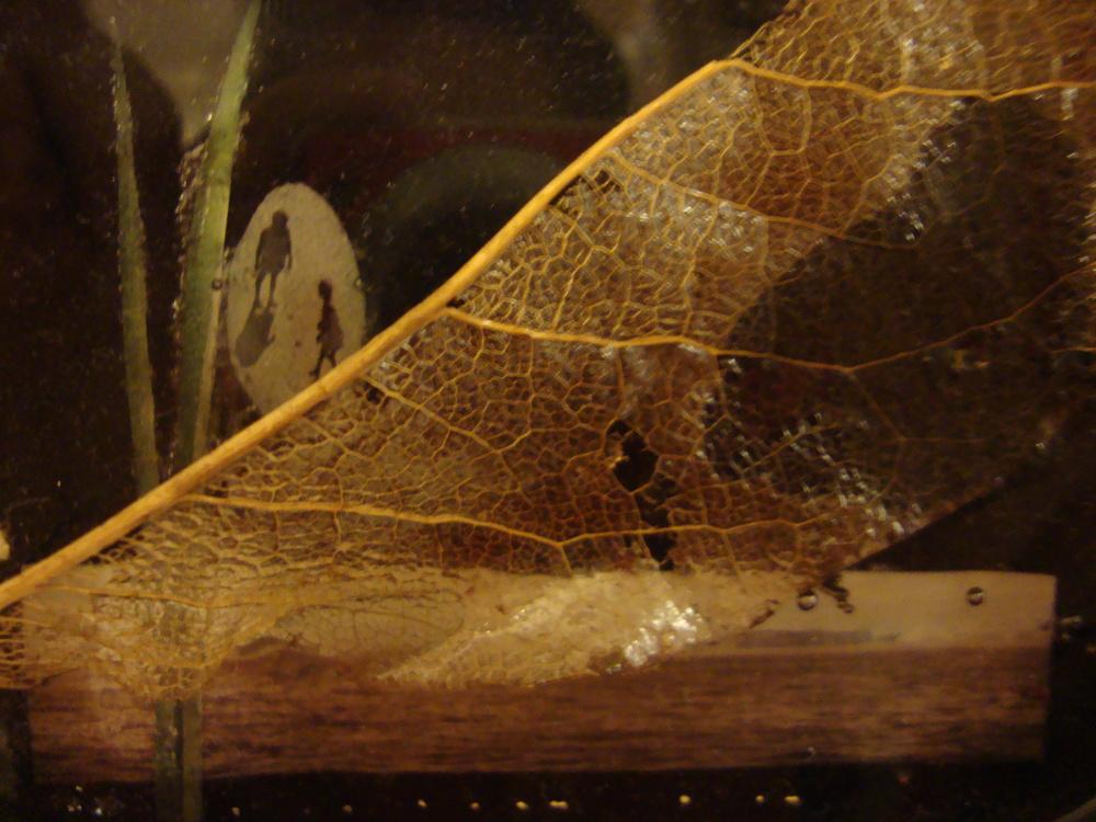 leaf closeup.JPG