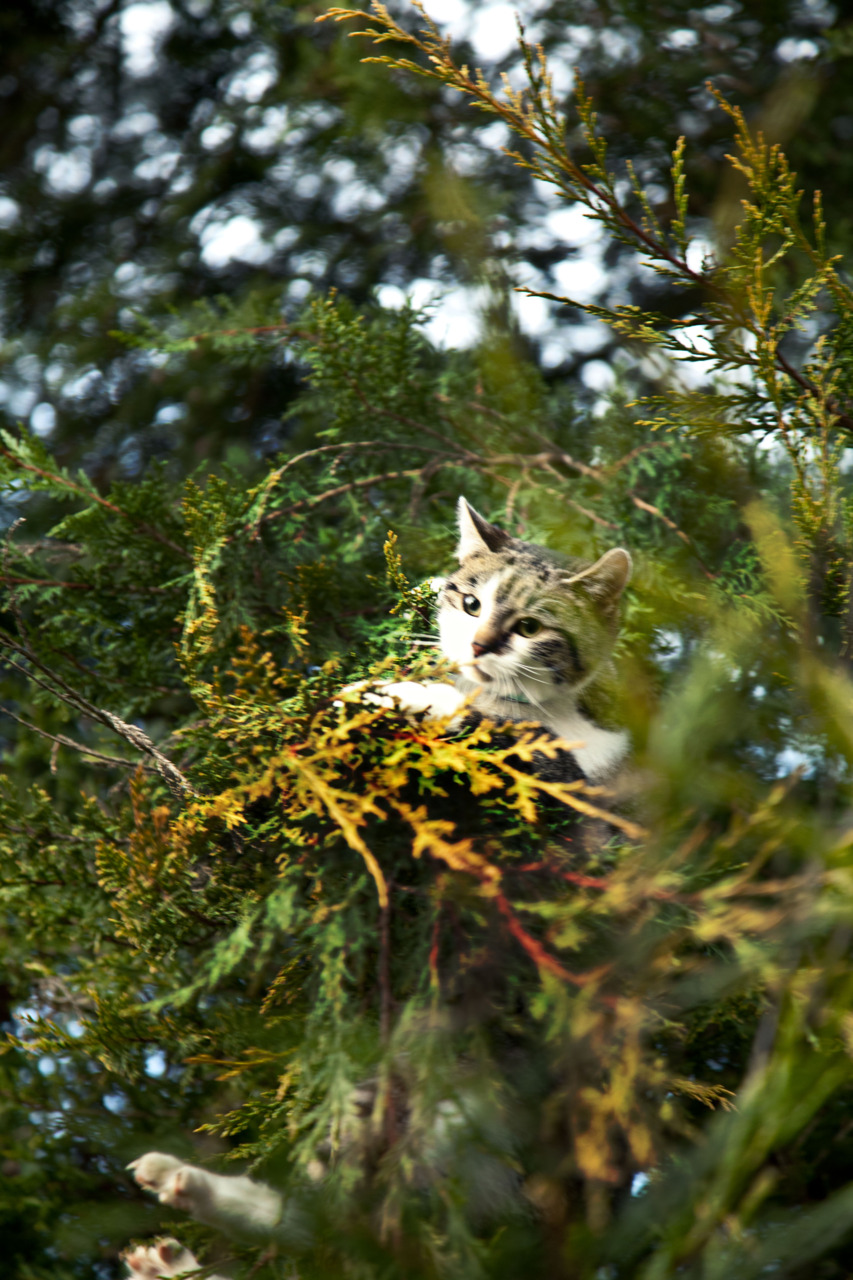 p355, take 11: And then the neighbor's cat got stuck in our tree
