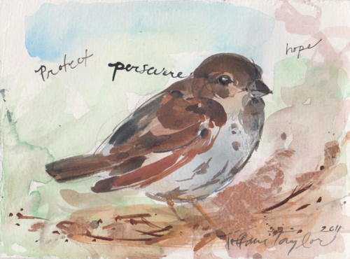 Sparrow:  Protect, Persevere, Hope...