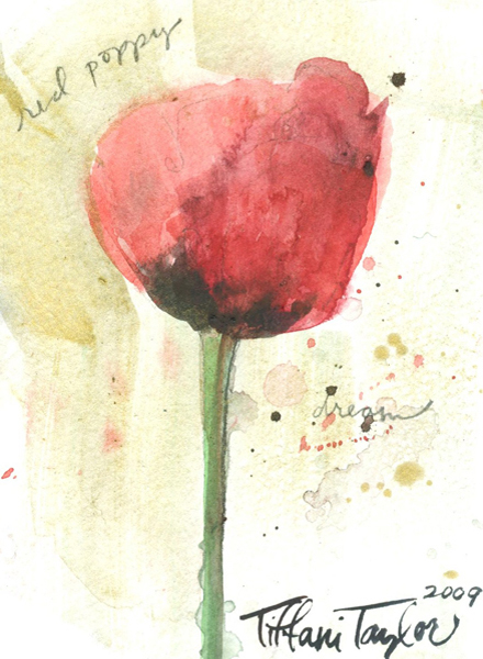 Red Poppy Bloom