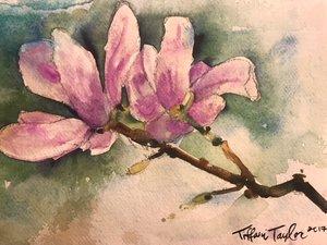 Magnolia Study 4 12x8.5